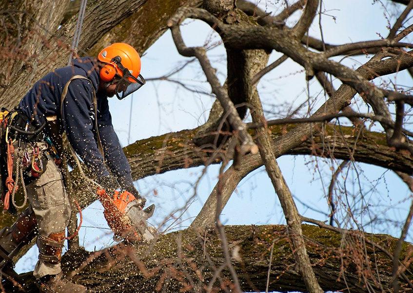 Кронирование дерева Москва